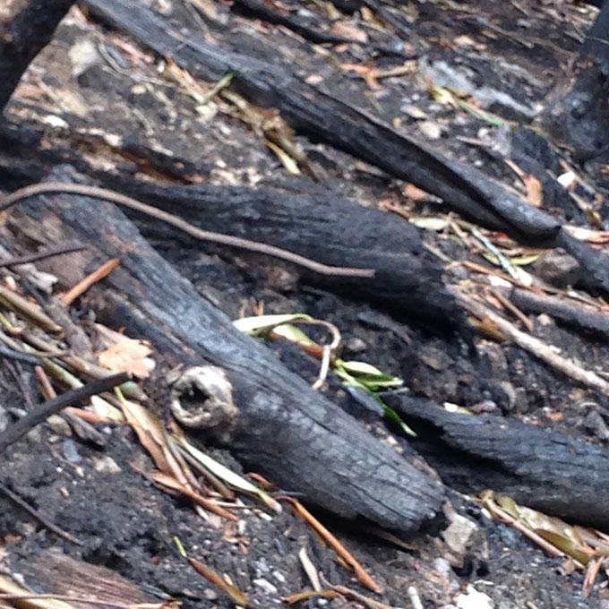 charred-wood
