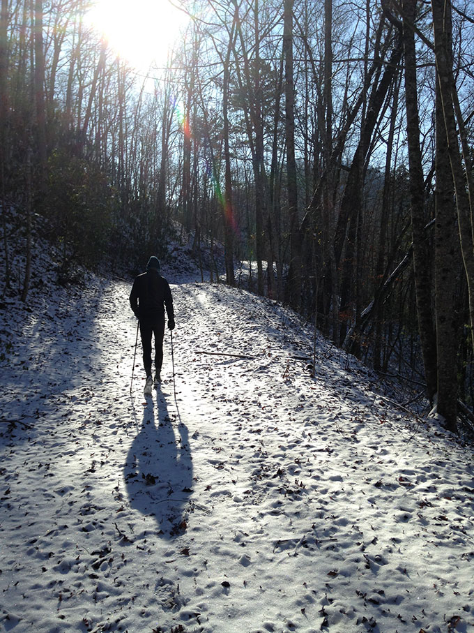 Brown Winter Woods And Diamond Dust In The Smokies